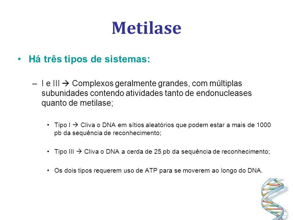 Metilase Há três tipos de sistemas: