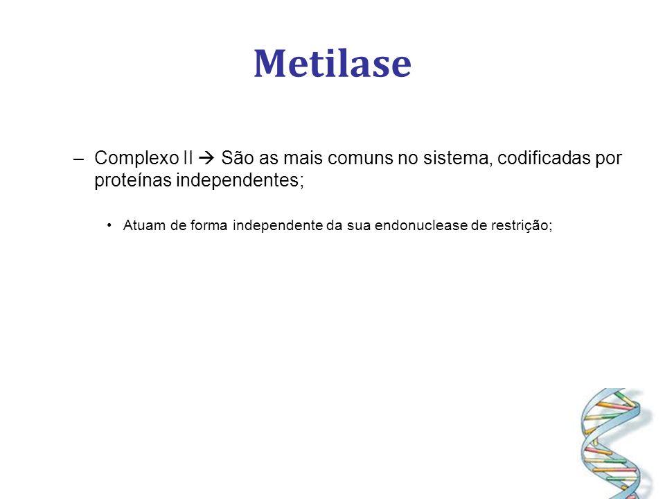 Metilase Complexo II  São as mais comuns no sistema, codificadas por proteínas independentes;