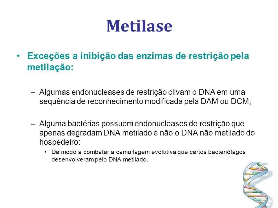 Metilase Exceções a inibição das enzimas de restrição pela metilação: