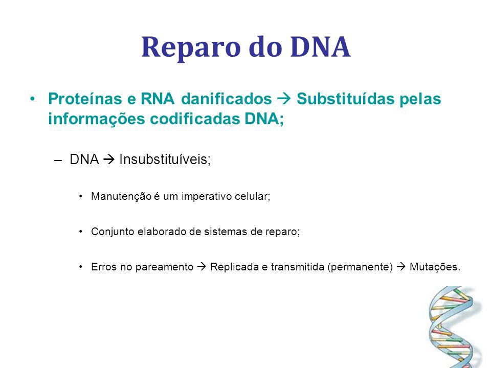 Reparo do DNA Proteínas e RNA danificados  Substituídas pelas informações codificadas DNA; DNA  Insubstituíveis;