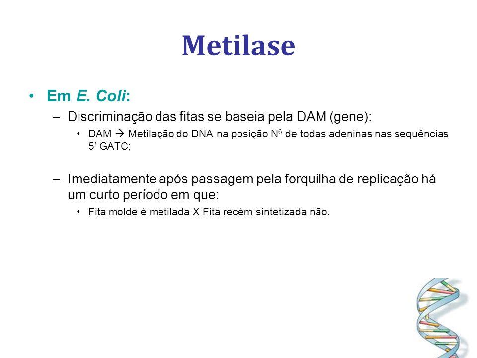 Metilase Em E. Coli: Discriminação das fitas se baseia pela DAM (gene):