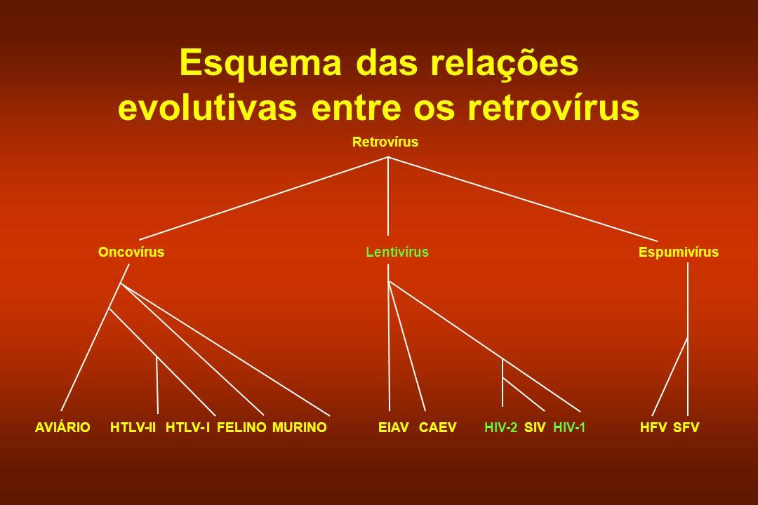 Esquema das relações evolutivas entre os retrovírus