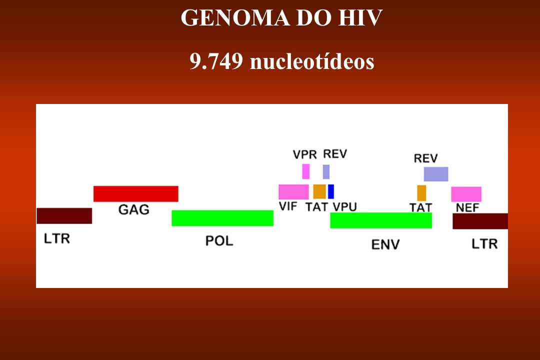 GENOMA DO HIV 9.749 nucleotídeos