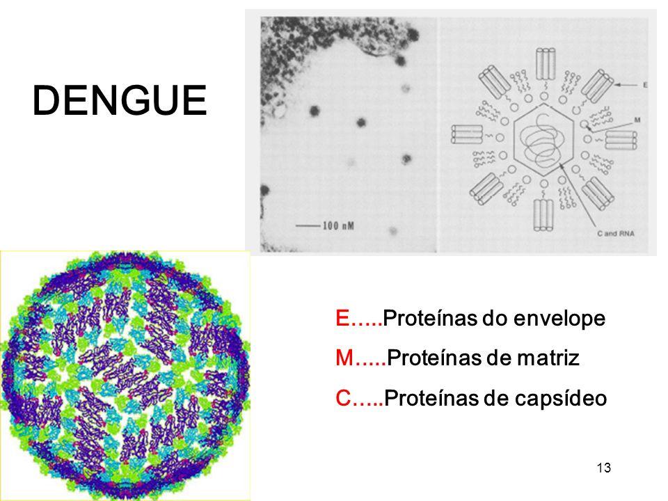 DENGUE E.....Proteínas do envelope M.....Proteínas de matriz
