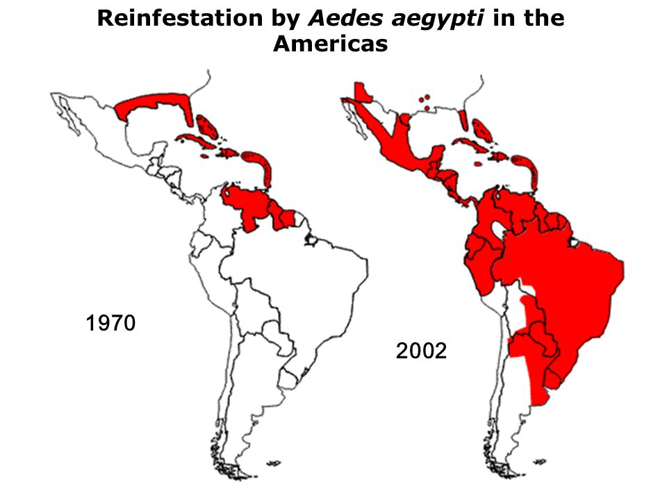 Reinfestation by Aedes aegypti in the Americas
