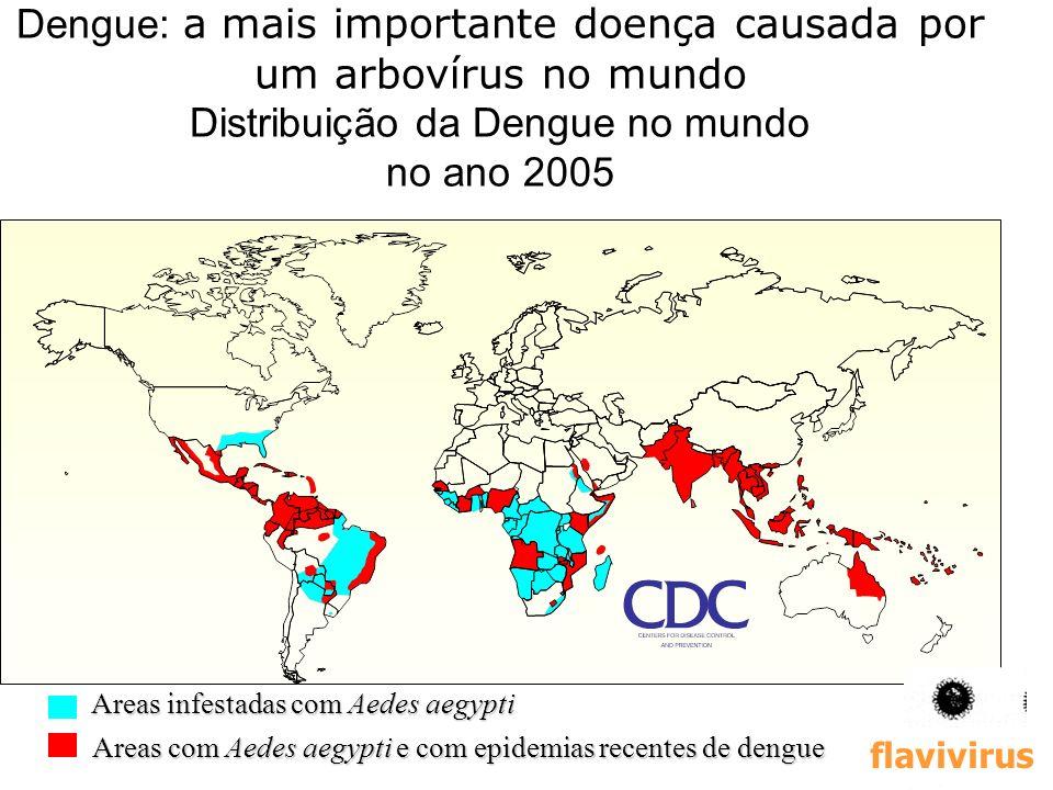 Dengue: a mais importante doença causada por um arbovírus no mundo Distribuição da Dengue no mundo no ano 2005