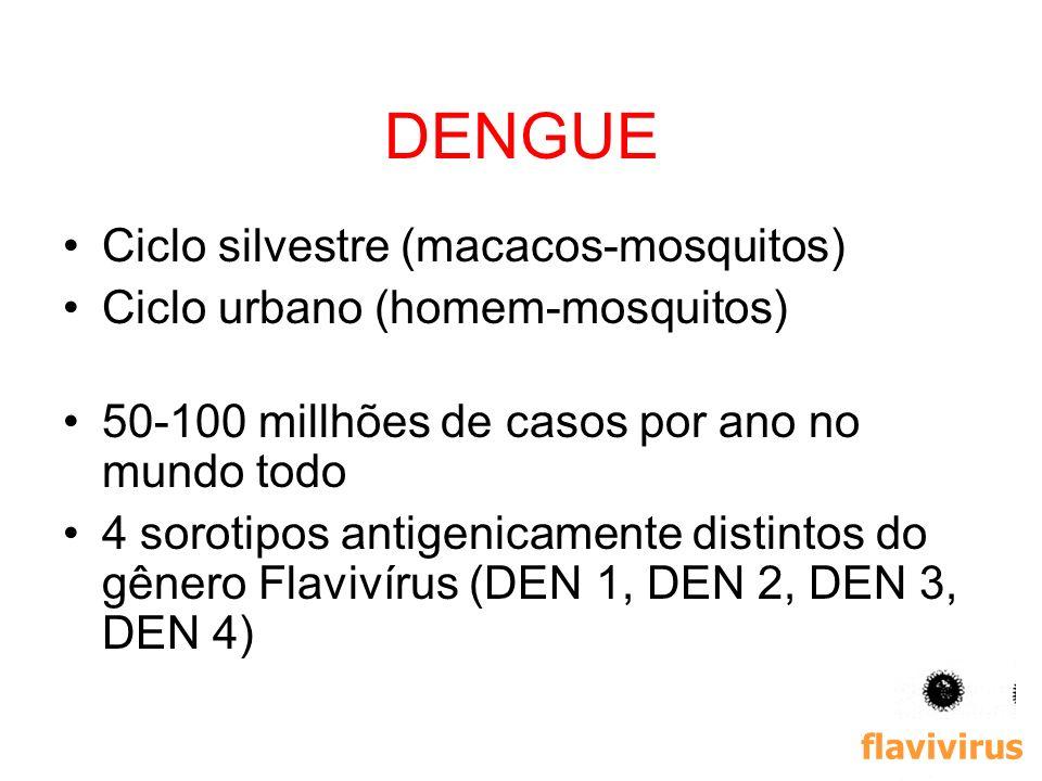 DENGUE Ciclo silvestre (macacos-mosquitos)
