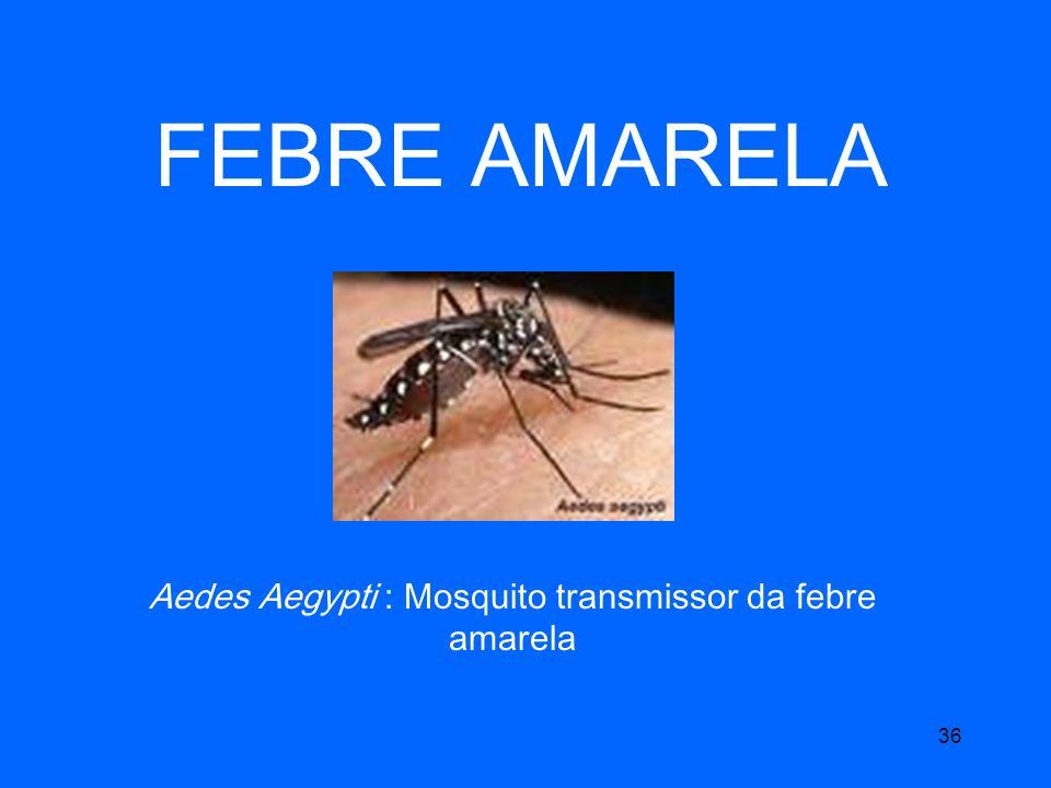 Aedes Aegypti : Mosquito transmissor da febre amarela