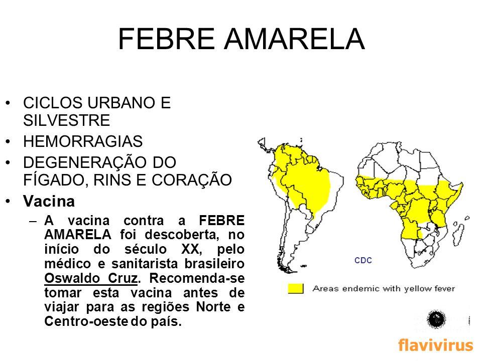 FEBRE AMARELA CICLOS URBANO E SILVESTRE HEMORRAGIAS