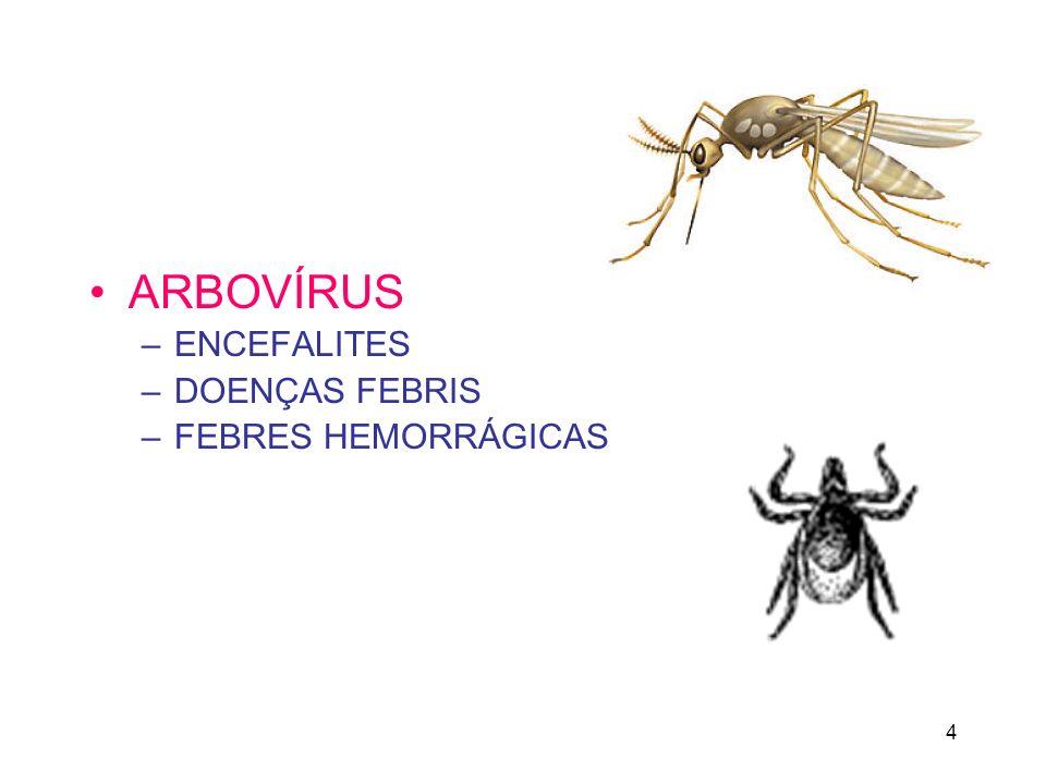 ARBOVÍRUS ENCEFALITES DOENÇAS FEBRIS FEBRES HEMORRÁGICAS