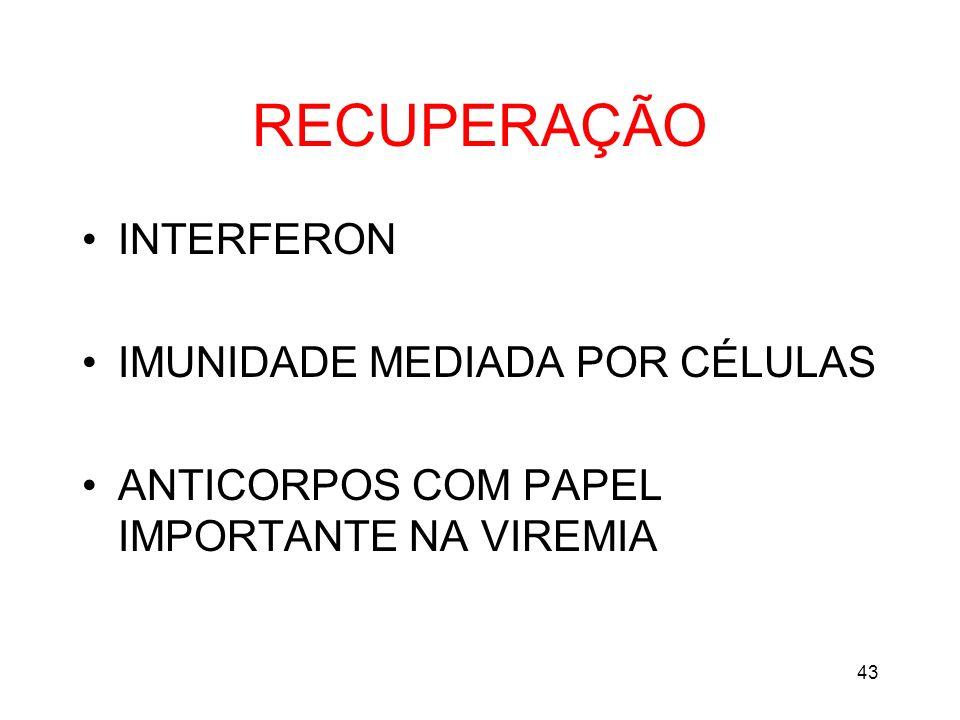 RECUPERAÇÃO INTERFERON IMUNIDADE MEDIADA POR CÉLULAS