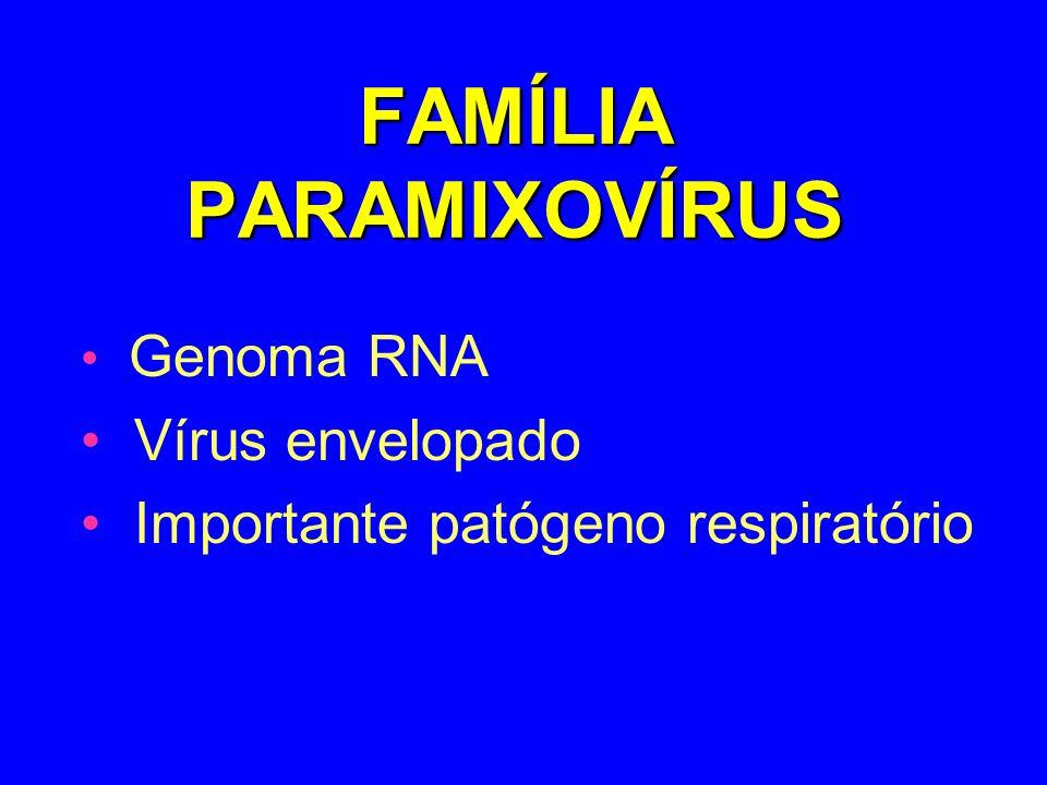 FAMÍLIA PARAMIXOVÍRUS