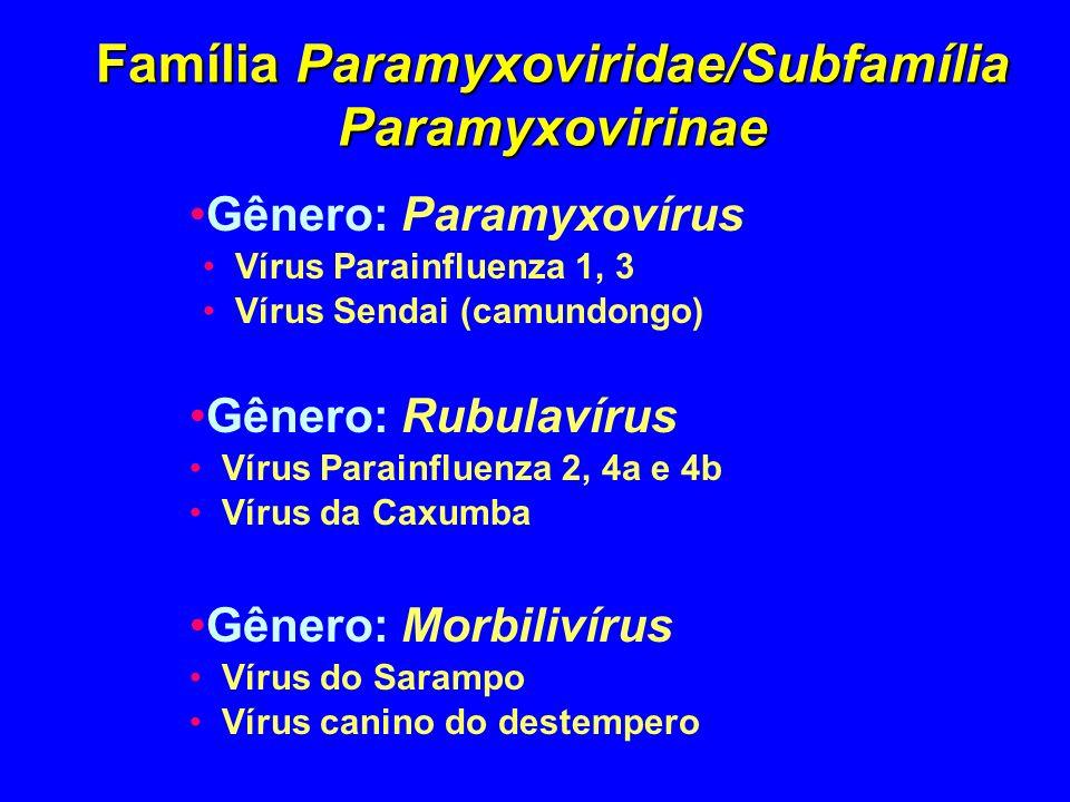 Família Paramyxoviridae/Subfamília Paramyxovirinae