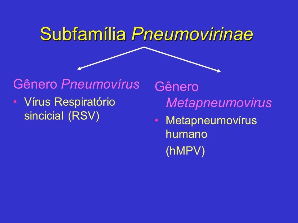 Subfamília Pneumovirinae