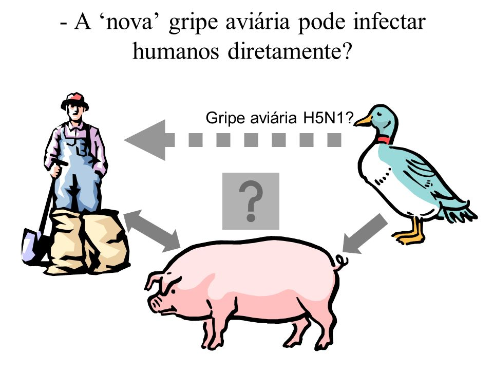 - A 'nova' gripe aviária pode infectar humanos diretamente