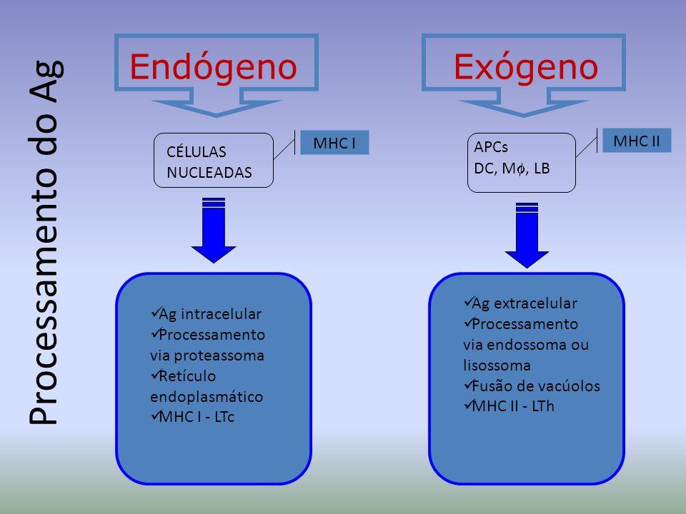 Processamento do Ag Endógeno Exógeno MHC II MHC I APCs