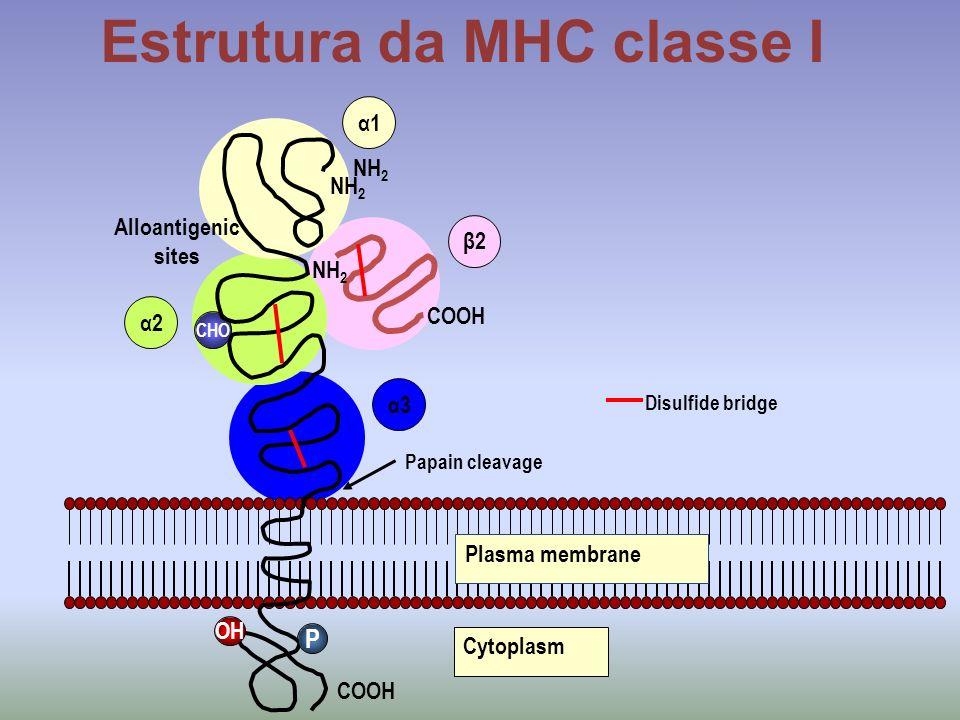 Estrutura da MHC classe I