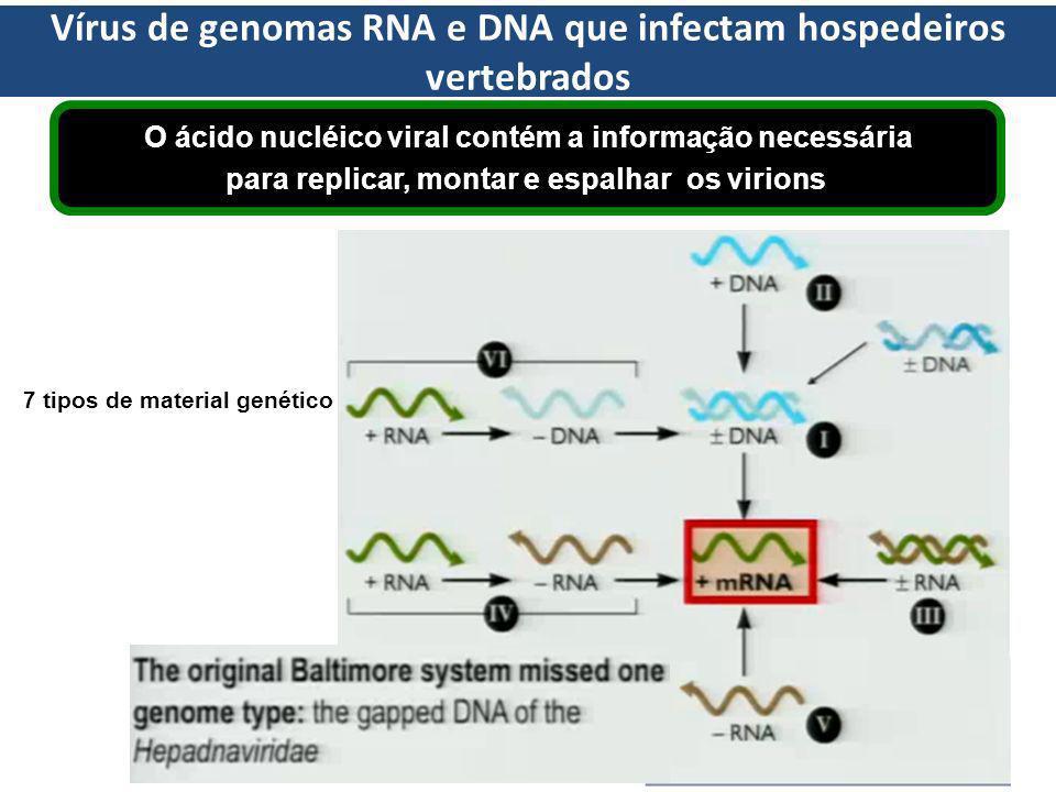 Vírus de genomas RNA e DNA que infectam hospedeiros vertebrados