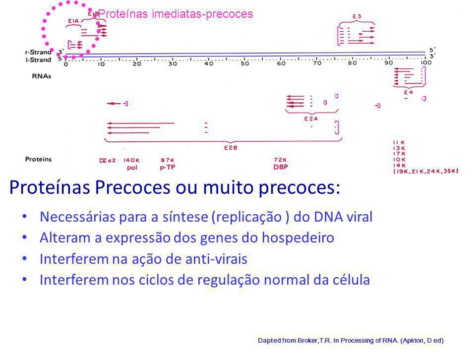 Proteínas Precoces ou muito precoces: