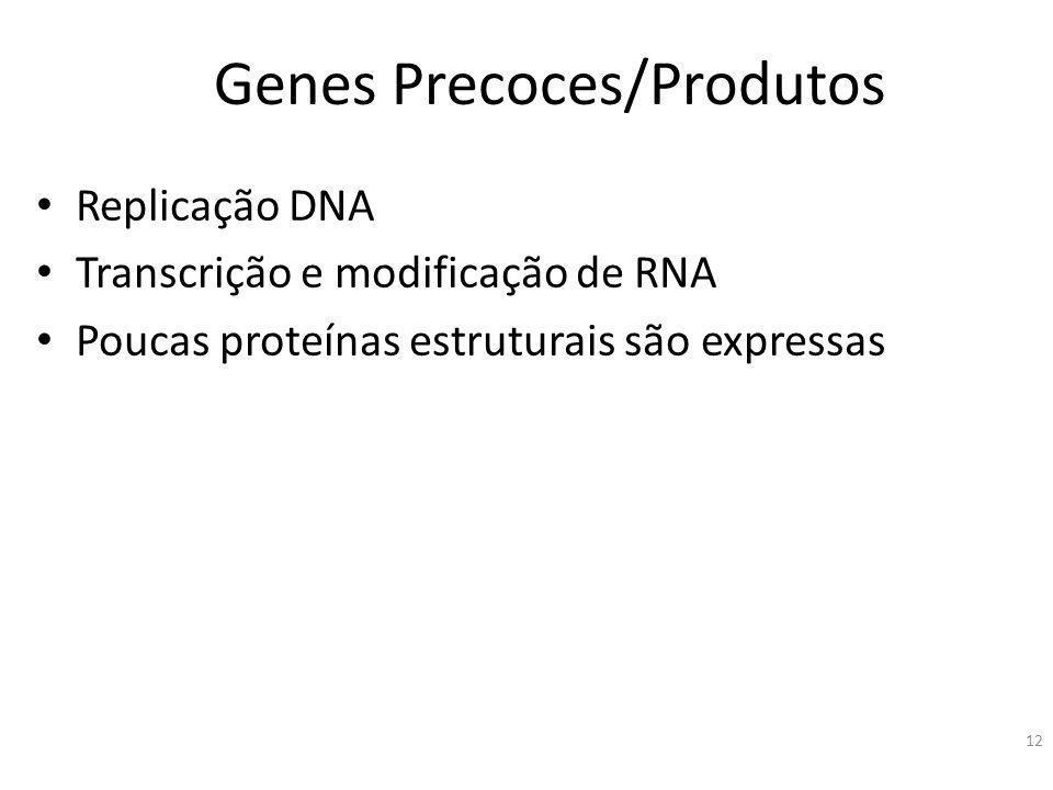 Genes Precoces/Produtos