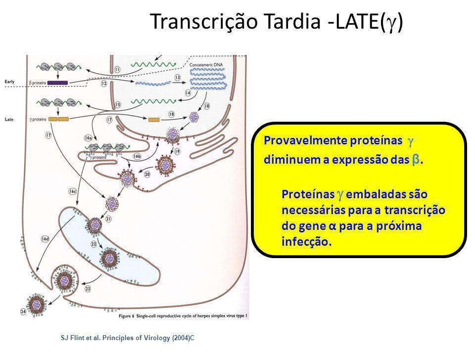 Transcrição Tardia -LATE()