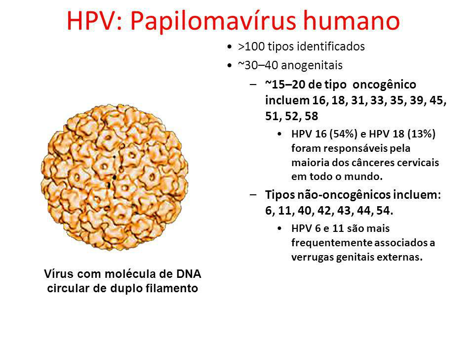 Vírus com molécula de DNA circular de duplo filamento