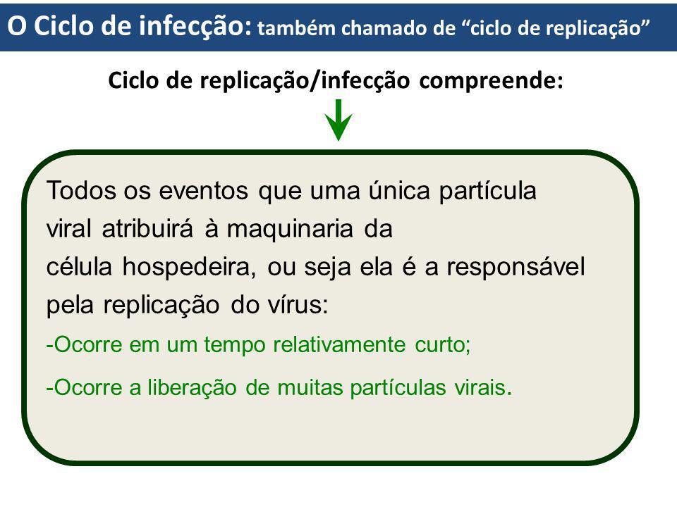 Ciclo de replicação/infecção compreende: