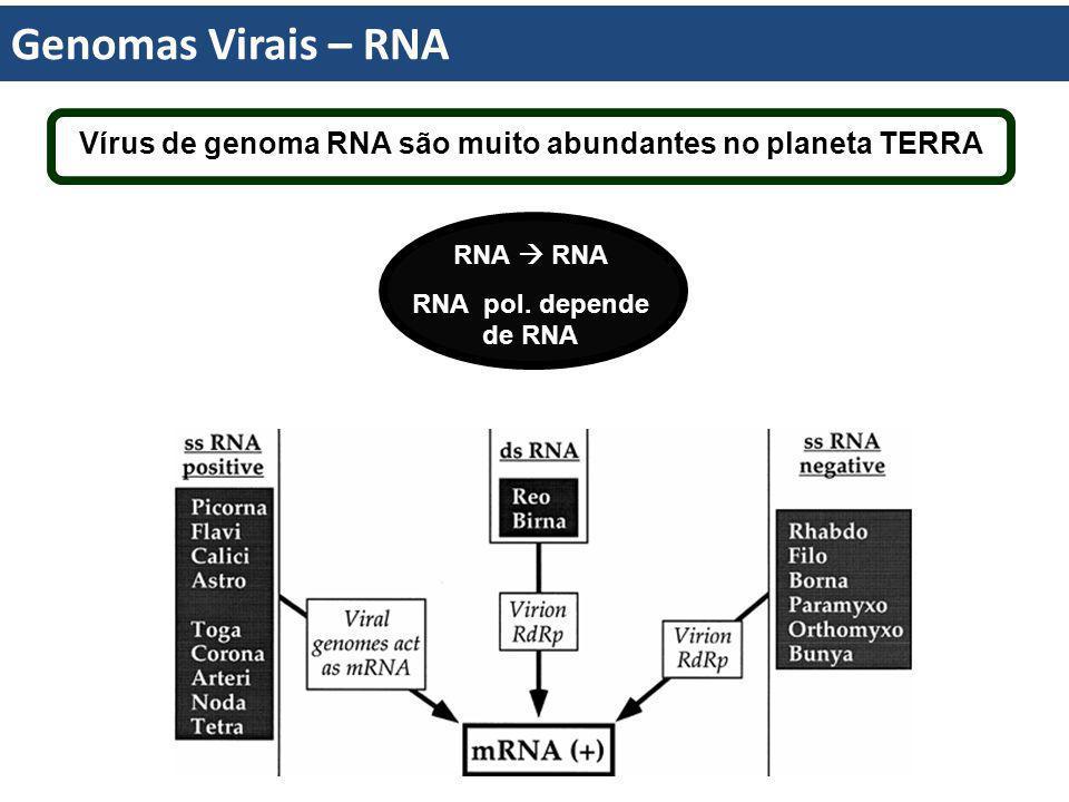 Vírus de genoma RNA são muito abundantes no planeta TERRA