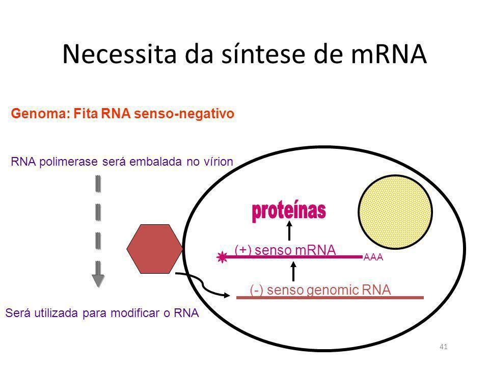 Necessita da síntese de mRNA
