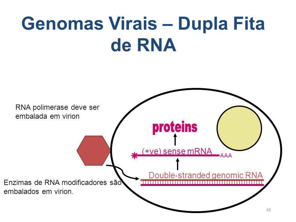 Genomas Virais – Dupla Fita de RNA