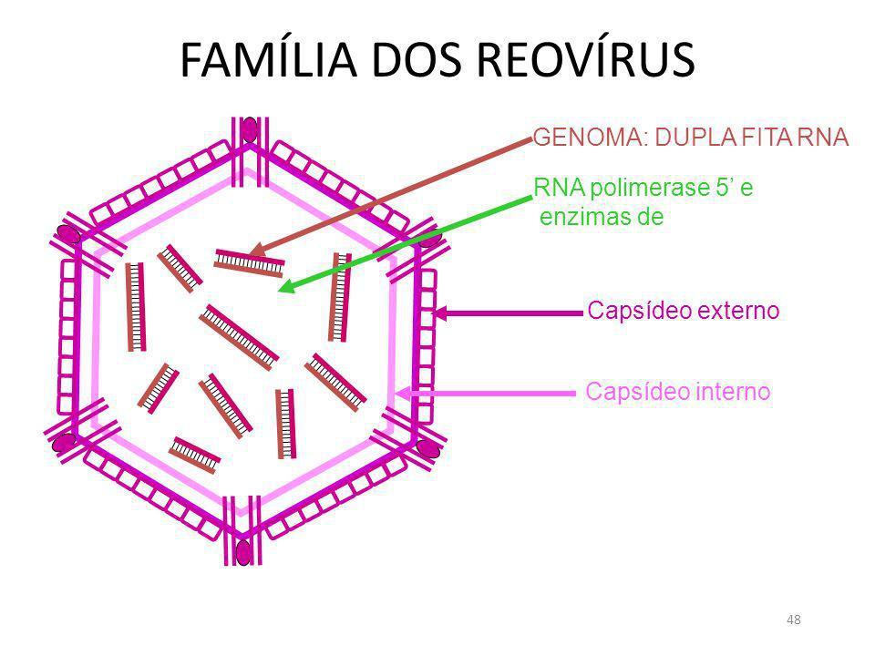 FAMÍLIA DOS REOVÍRUS GENOMA: DUPLA FITA RNA RNA polimerase 5' e