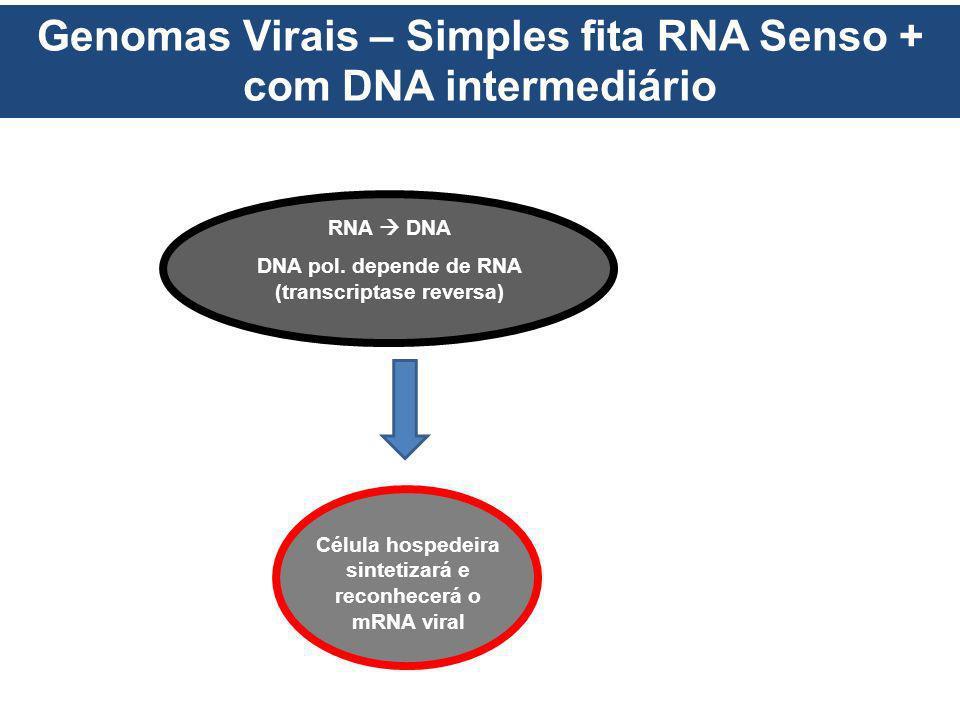 Genomas Virais – Simples fita RNA Senso + com DNA intermediário