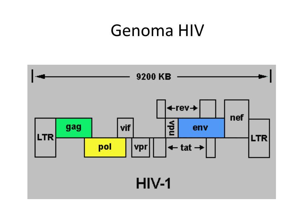 Genoma HIV