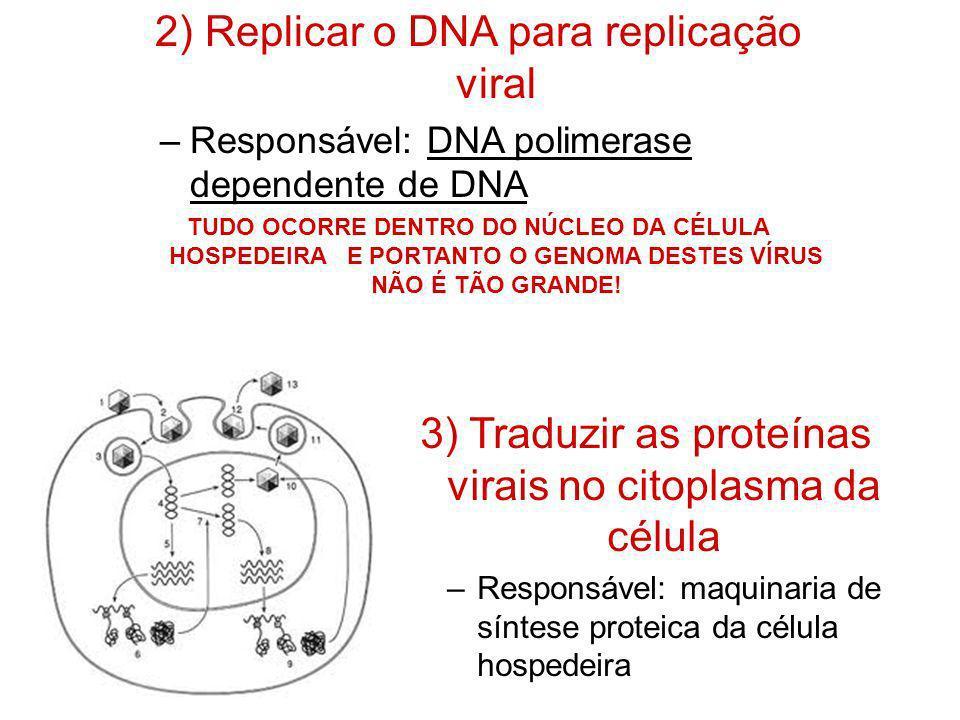 2) Replicar o DNA para replicação viral