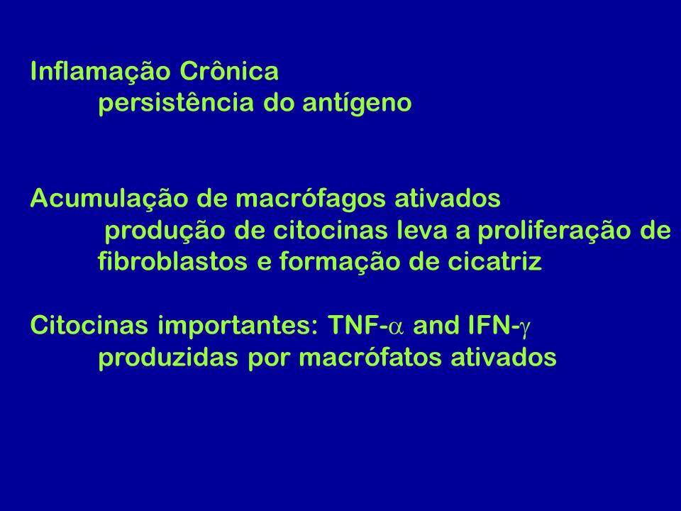 Inflamação Crônica persistência do antígeno. Acumulação de macrófagos ativados. produção de citocinas leva a proliferação de.