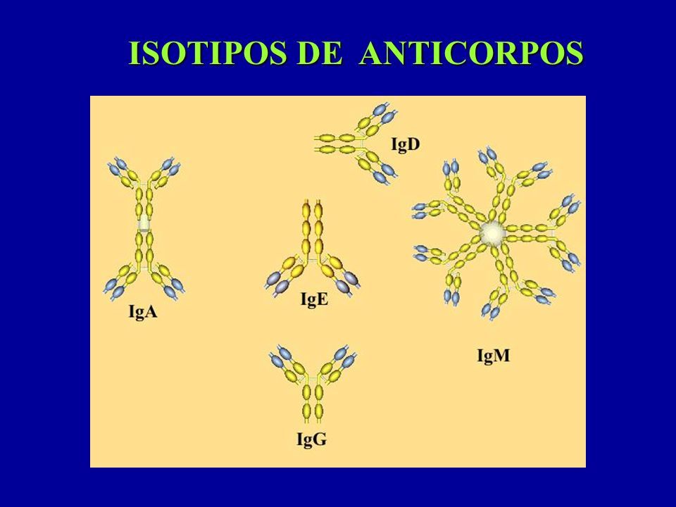 ISOTIPOS DE ANTICORPOS