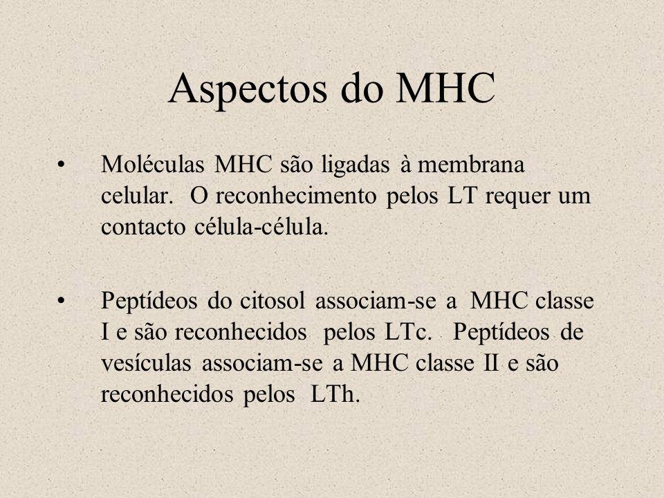 Aspectos do MHC Moléculas MHC são ligadas à membrana celular. O reconhecimento pelos LT requer um contacto célula-célula.