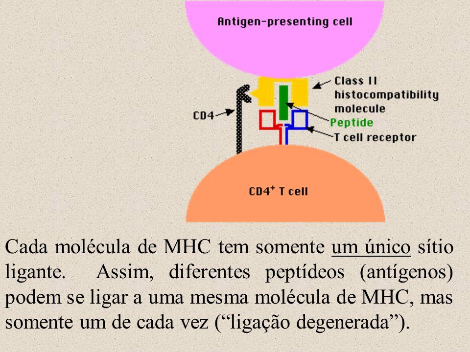 Cada molécula de MHC tem somente um único sítio ligante