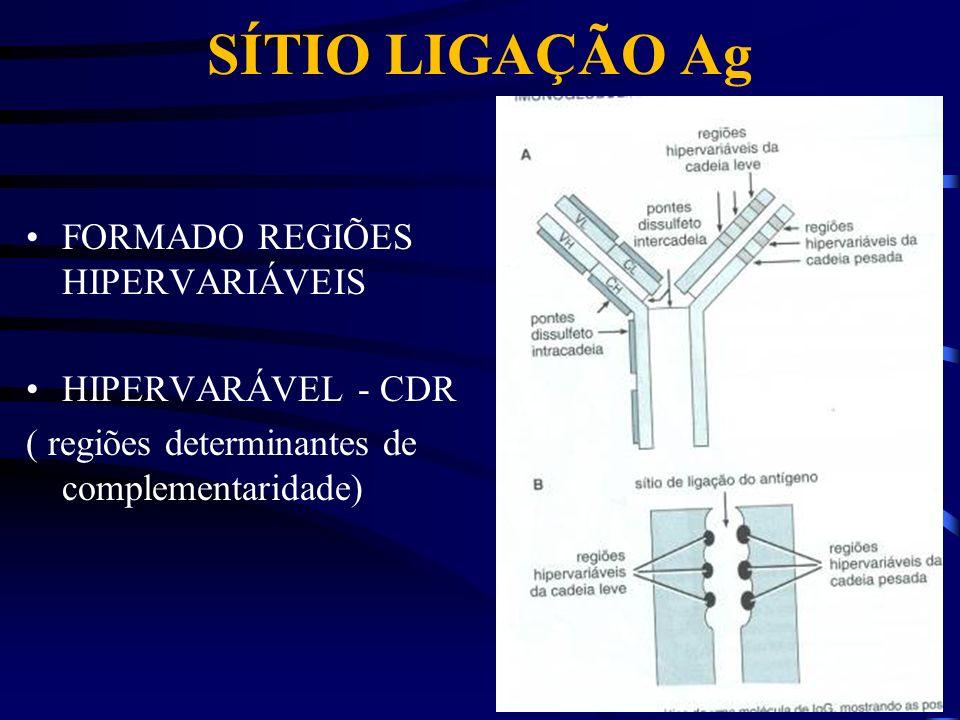 SÍTIO LIGAÇÃO Ag FORMADO REGIÕES HIPERVARIÁVEIS HIPERVARÁVEL - CDR