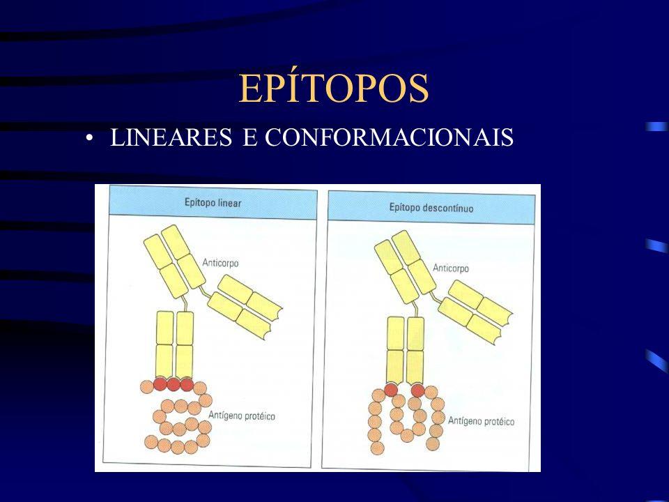EPÍTOPOS LINEARES E CONFORMACIONAIS
