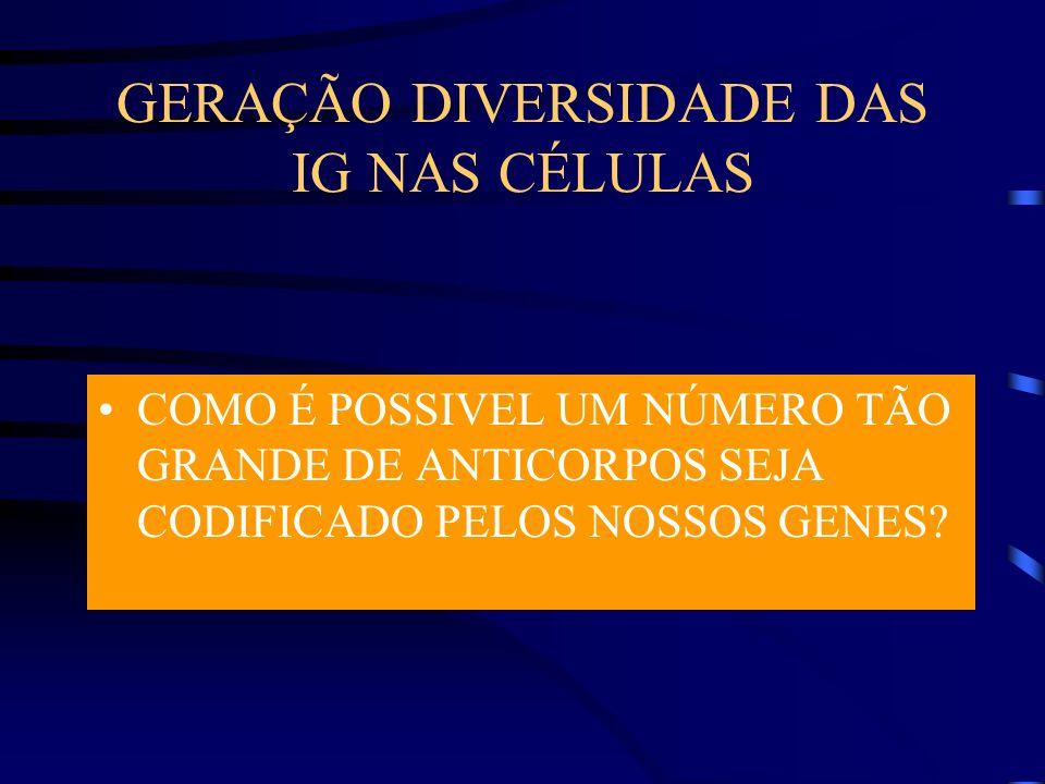 GERAÇÃO DIVERSIDADE DAS IG NAS CÉLULAS