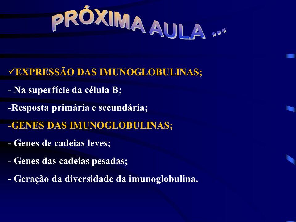 PRÓXIMA AULA ... EXPRESSÃO DAS IMUNOGLOBULINAS;