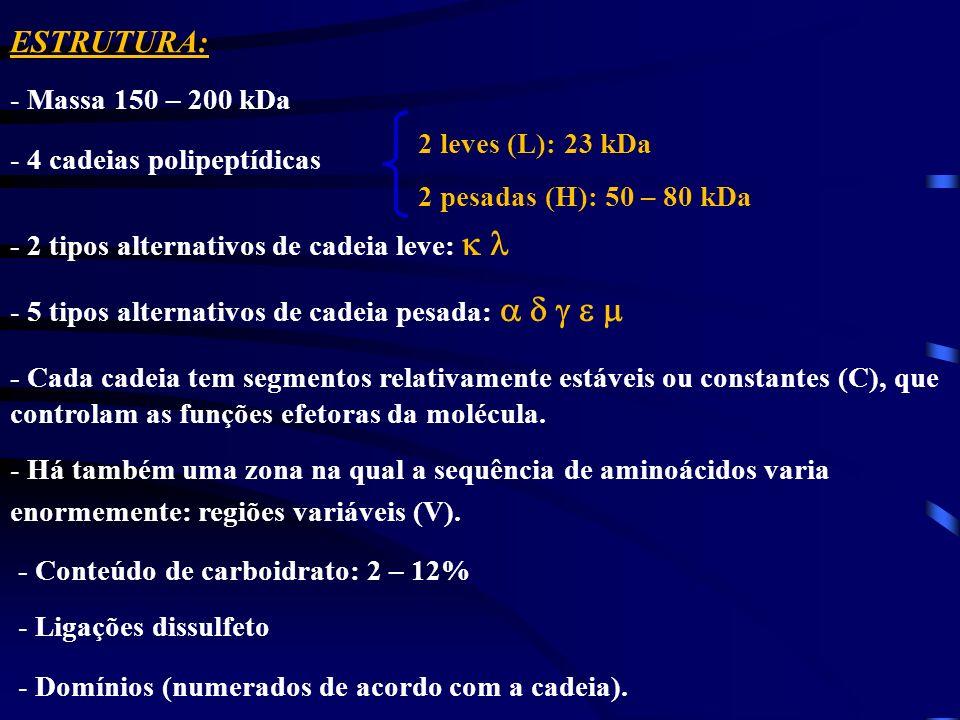 ESTRUTURA: Massa 150 – 200 kDa 4 cadeias polipeptídicas