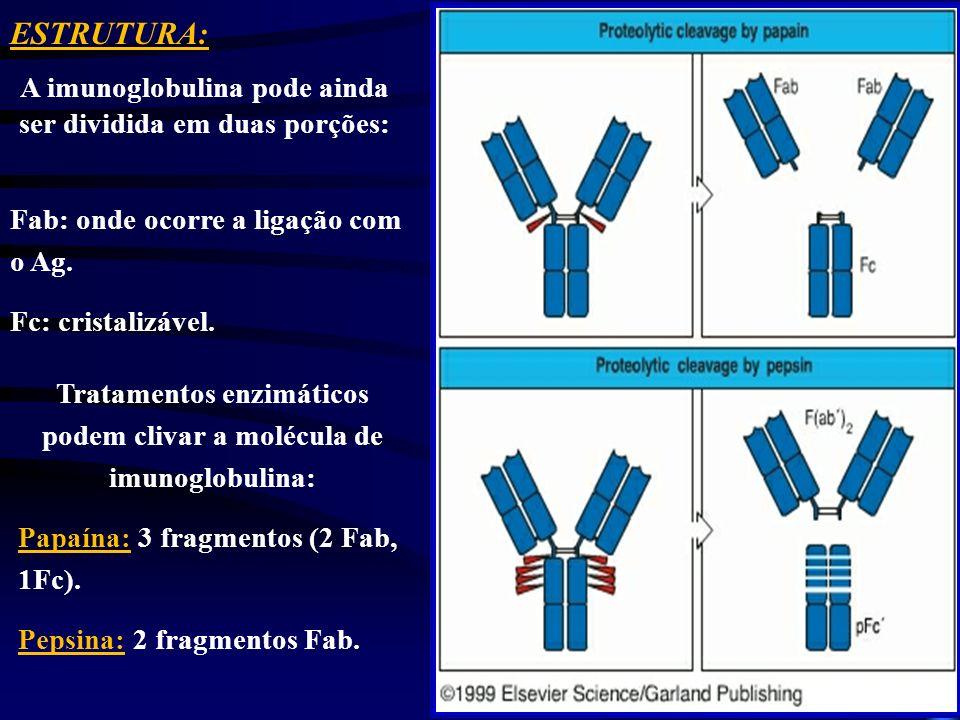 ESTRUTURA: A imunoglobulina pode ainda ser dividida em duas porções: