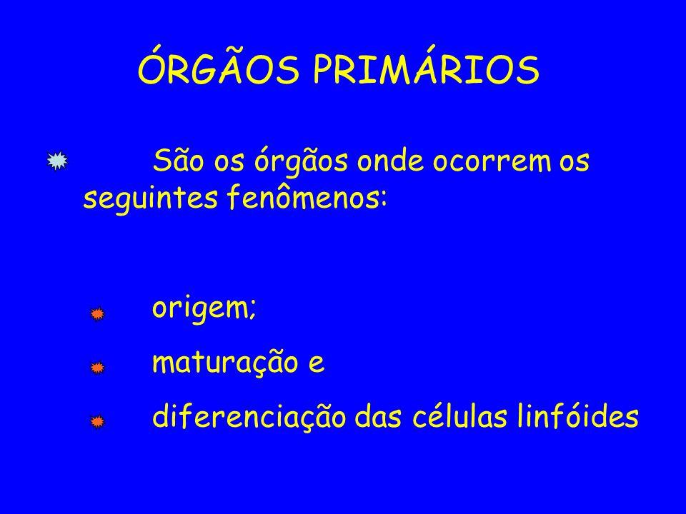ÓRGÃOS PRIMÁRIOS São os órgãos onde ocorrem os seguintes fenômenos:
