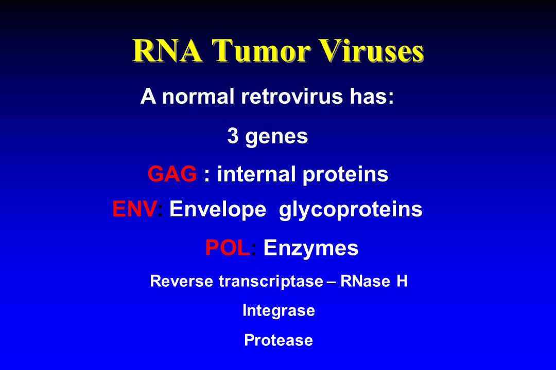RNA Tumor Viruses A normal retrovirus has: 3 genes