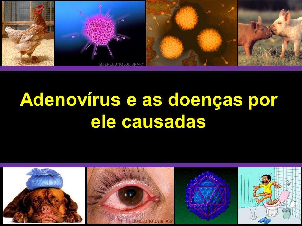 Adenovírus e as doenças por ele causadas