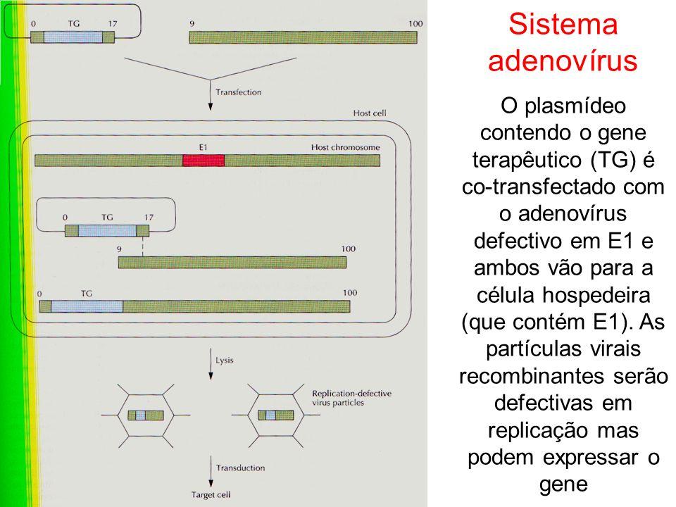 Sistema adenovírus