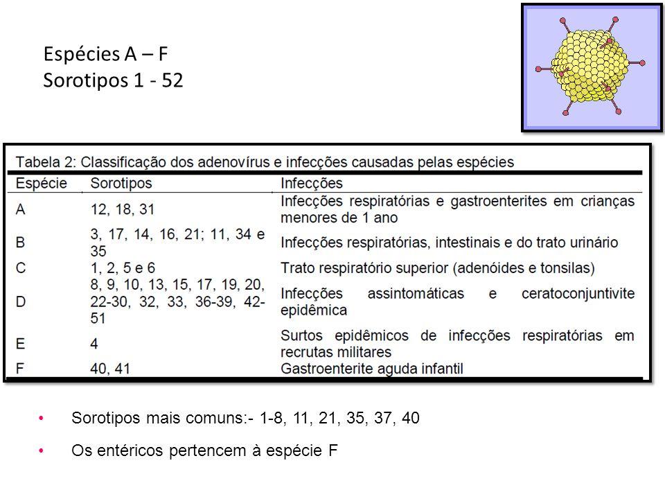 Espécies A – F Sorotipos 1 - 52