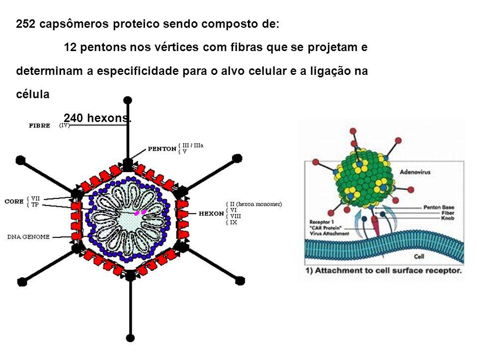 252 capsômeros proteico sendo composto de:
